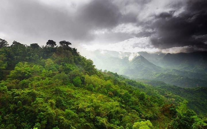 Dschungel Moers